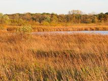 Reserva natural Illinois de la pradera de Wadsworth Imagenes de archivo