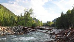 Reserva natural rio Altai da montanha Paisagem bonita nas montanhas rio áspero, o conceito da liberdade video estoque