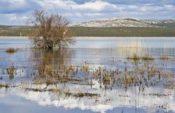 Reserva ornitológica Jezero de Vransko Croácia foto de stock royalty free