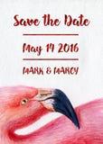 Reserva pintada a mano de la impresión del arte del retrato del perfil del pájaro del ejemplo del rosa del flamenco de la acuarel Fotografía de archivo
