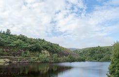 Reservatório da uva-do-monte Foto de Stock