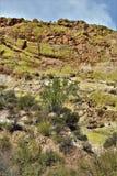 Reservatório do lago Saguaro, Maricopa County, o Arizona, Estados Unidos Foto de Stock