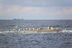 Reserve Bird Paradise on Sobieszewo Island, Poland Stock Image
