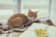 Reserve con la hoja del amarillo del otoño y el gato rojo-blanco Fotografía de archivo