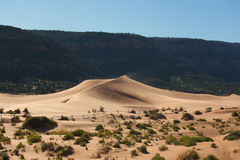 Reserve Coral Pink sand dunes in the U.S. Royalty Free Stock Photos