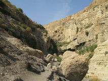 Reserve Ein Gedi, Israel Stock Images