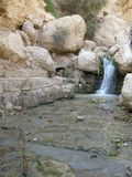 Reserve Ein Gedi, Israel Royalty Free Stock Photo