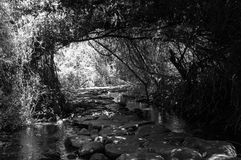 Reserve Keren Kaeyemet Tel Dan in northern Israel. A walk along the river Dan Stock Photography