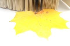 Reserve las hojas de otoño del wih Imagen de archivo