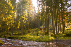 Reserved park in the Carpathian Mountains on a beautiful, sunny,. Morning weather Stock Photos