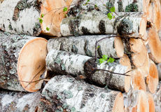 Reserves of birch logs Stock Photography