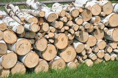 Reserves of birch logs Royalty Free Stock Images