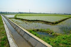 Paddy field and irrigation canal. From the reservoir through a certain dam, through a certain channel, through a certain measure, the water in the reservoir is Royalty Free Stock Photo