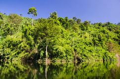 Reservoir in forest. Stock Image