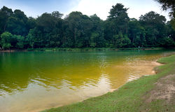 Reservoir in MacRitchie park, Singapore Royalty Free Stock Photography