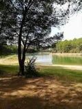 Reservoir praktisch droog met vele pijnbomen stock fotografie