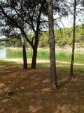 Reservoir praktisch droog met vele pijnbomen royalty-vrije stock afbeeldingen