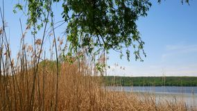 Reservoir in Ukraine, a simple landscape. Reservoir in Ukraine, a simple landscape stock video footage