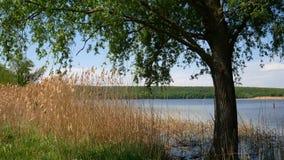 Reservoir in Ukraine, a simple landscape. Reservoir in Ukraine, a simple landscape stock video