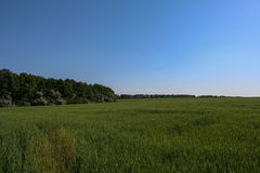 Reservoire und Feld Stockfoto