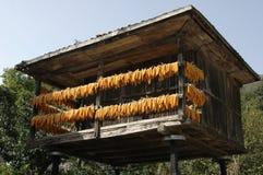 reservou secar espigas de milho no preto? a Fotos de Stock