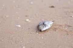 Reses muertas de pescados muertos Imagen de archivo