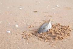 Reses muertas de pescados muertos Foto de archivo