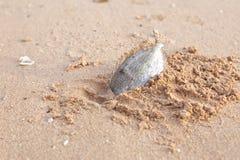 Reses muertas de pescados muertos Imagen de archivo libre de regalías
