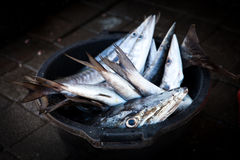 Resh Barracuda fish (Sphyraena barracuda) selling in the fish market Royalty Free Stock Photos