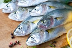 Resh fish with the vegetables, condiment and lemon, bluefish. Food preparation. stock photos