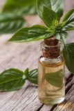Resh oil with basil close-up in a bottle vertical. Stock Image