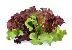 Resh red and green coral salad or red lettuce isolated on the white royalty free stock photo