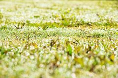 Resh spring green grass Stock Image