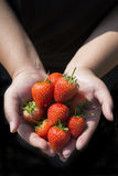 Resh strawberries in human hand. Fresh strawberries in human hand royalty free stock photography