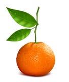 Resh tangerin Royaltyfri Foto