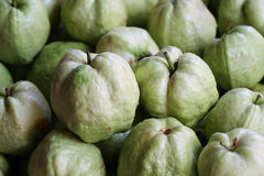 Resh wild guava, organic green fruit  vegetarian and fruit lover Royalty Free Stock Photography