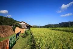 Resident village near terraced rice field Royalty Free Stock Photography