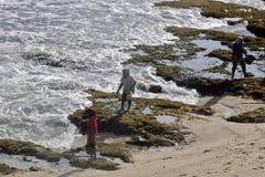 Residenti che cercano alga intorno alla costa di Dadapan di wonogiri di Paranggupito che confina il cen costiero di Jogjakarta de Immagine Stock Libera da Diritti
