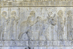 Residenti dell'impero storico con gli animali Bassorilievo di pietra in città antica Persepolis, Iran Fotografia Stock Libera da Diritti