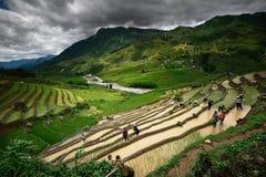 Residenti di funzionamento nei terrazzi del riso Immagini Stock