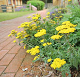 Residential care home border plants Royalty Free Stock Images