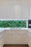 Residential contemporary kitchen sink with low window showing a. Green hedge royalty free stock photo