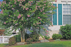 Home Landscaping. Residential Home Landscaping, Flowering Purple Crape Myrtle Tree, Decorative Stone, Bush and Grass stock images
