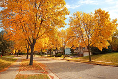 Residential Neighborhood in Autumn. Residential street in Fall with Golden colors and falling leaves Royalty Free Stock Photos
