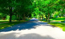 Residential Street. A tree lined residential street Stock Images