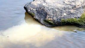Residu's onder een steen stock video