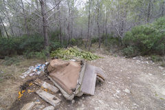 Residues. Residues lying in the forest stock images