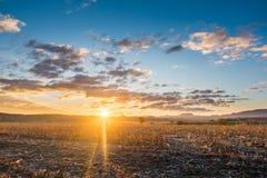 Residuo del maíz, rastrojo en campo en la salida del sol Fotografía de archivo libre de regalías