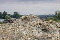 Residuo della lavorazione del legno 2 Fotografia Stock Libera da Diritti