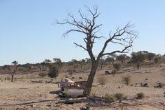 Residuo III di Kalahari Immagini Stock Libere da Diritti
